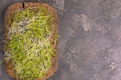 新鲜mircogreen在葡萄酒cuttig板的韭葱 库存照片