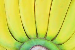 新黄色香蕉背景格洛斯米谢尔的关闭 免版税库存图片