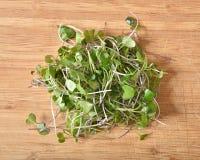 新,有机发芽的微绿色 库存照片