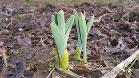 新,鲜花在庭院里长大 免版税库存照片