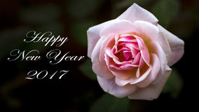 新年贺卡罗斯 免版税库存图片
