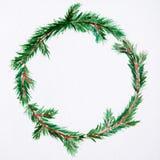 新年和圣诞节缠绕-在白色backg的杉树 库存照片