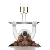 新年好狗 免版税图库摄影
