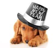 新年快乐小狗 免版税库存图片