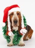 新年快乐,圣诞节贝塞猎狗开会,被隔绝 免版税图库摄影