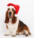 新年快乐,圣诞节贝塞猎狗开会,被隔绝 图库摄影