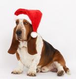 新年快乐,圣诞节贝塞猎狗开会,被隔绝 库存照片