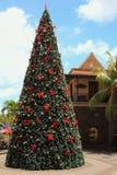 新年树在热带 路易斯・毛里求斯端口 免版税库存图片