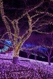 新年照明在日本 库存图片