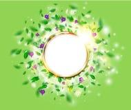 新绿色与圆的金黄框架、叶子、雏菊和番红花的春天背景花卉概念 免版税图库摄影