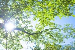 新绿色叶子和阳光 库存照片