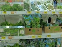 新绿色和莴苣 免版税库存图片