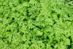 新绿色春天背景在白天离开 免版税库存照片