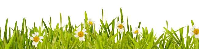 新绿色春天草和雏菊边界 免版税库存图片