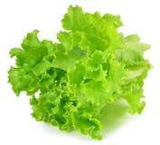 新绿色查出的散叶莴苣白色 免版税库存照片
