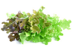 新绿色查出的散叶莴苣白色 免版税库存图片