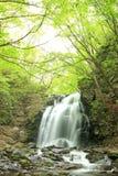 新绿色瀑布  库存图片