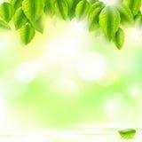 新绿色离开与晴朗的抽象自然本底 免版税库存图片