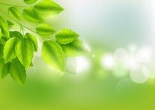 新绿色离开与晴朗的bokeh摘要自然本底 库存图片