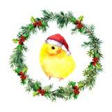 新年花圈-圣诞节在红色圣诞老人` s帽子的婴孩鸡 水彩鸟 库存图片