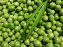 新绿豆荚背景 免版税库存照片