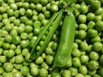 新绿豆荚背景 库存图片