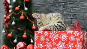 新年` s装饰在假日精神上围拢的六个场面、美丽的猫和白色小狗的混合 影视素材