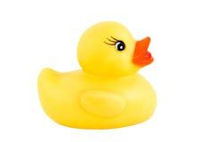 新1只的鸭子 库存照片