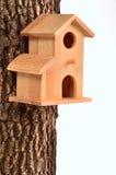 方便的房子starling的树干 库存照片