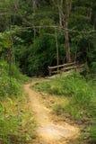 方式在森林里 库存图片