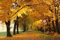 方式在秋天公园 免版税库存照片