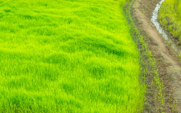 方式在绿色农场,泰国的乡下 库存图片