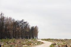 方式通过在火以后的一个被烧的杉木森林 库存照片