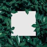 方形框架,空白为广告卡片或邀请 免版税库存照片