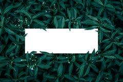 方形框架,空白为广告卡片或邀请 图库摄影