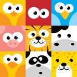 方形的动物面孔象按钮集合 免版税图库摄影