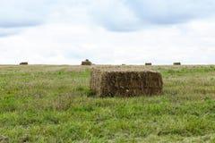 方形的干草堆特写镜头 免版税库存图片