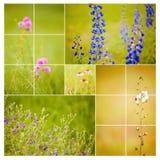 方形野花拼贴画 库存图片