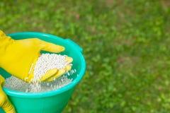 施肥植物、草坪、树和花 手套的花匠拿着在草的白色肥料球 图库摄影