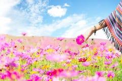 旅客亚洲妇女手接触波斯菊花,自由和在花农场放松, 图库摄影