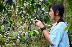 旅客泰国妇女旅行参观和射击照片未成熟的coffe 图库摄影