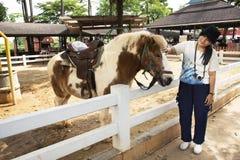 旅客泰国妇女旅行和摆在与矮小的马身分的作为照片的在槽枥放松在动物农场在Saraburi,Thailan 免版税库存照片
