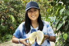 旅客泰国妇女藏品和展示留连果果子在果子冲击节日 免版税库存图片