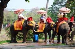 旅客游览的骑马大象在阿尤特拉利夫雷斯古城附近 库存图片