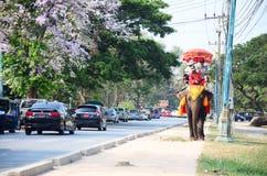 旅客游览的骑马大象在阿尤特拉利夫雷斯古城附近 免版税库存图片