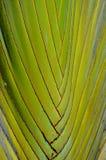 旅客的棕榈样式 免版税库存图片