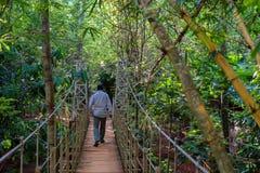旅客远足在热带森林里 免版税图库摄影