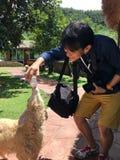 旅游哺养的男孩哺养的羊羔 免版税库存照片