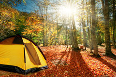 旅游帐篷在一个安静的秋天森林里 免版税库存图片