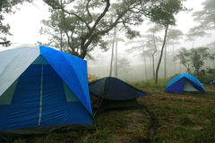 旅游帐篷在森林里 图库摄影